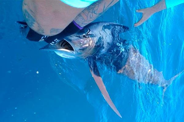 fishing reports 20201018 ecuagringo galapagos 02
