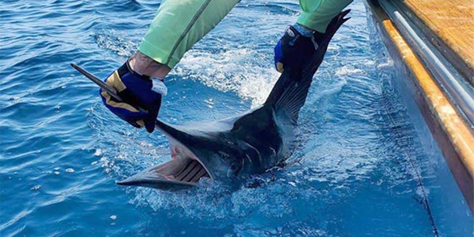 marlin fishing galapagos islands 20210128 01