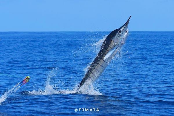 promo marlin fishing 20210306 03