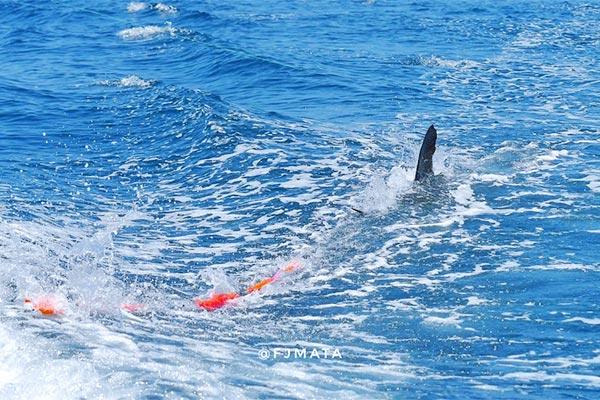 promo marlin fishing 20210310 02
