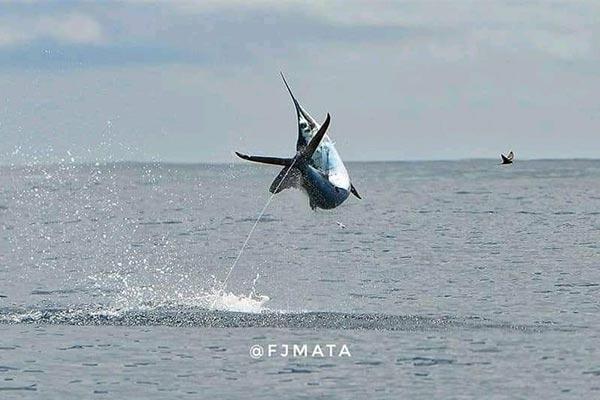promo marlin fishing 20210321 02