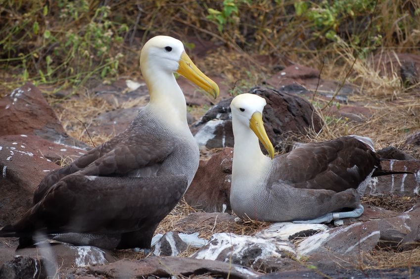 Love Is in the Air in the Galapagos