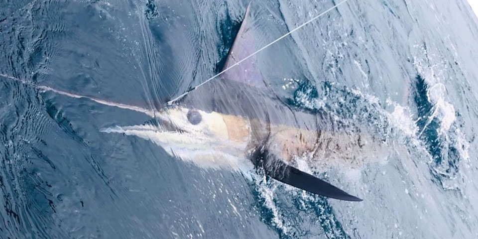 special shared fishing galapagos 20210908 01