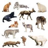 260px Mam%C3%ADferos - Animales Vertebrados Definición