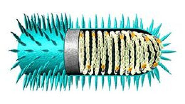 Resultado de imagen para virus de la rabia