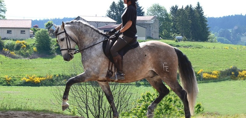 equitation stage poney cheval firminy st etienne 42