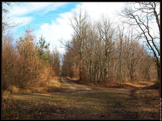La forêt des Trois Pignons