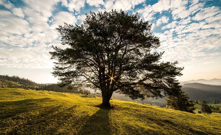 O valor da árvore