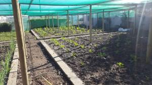 Etafeni Food Garden