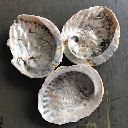 abalone schelpen assessoires