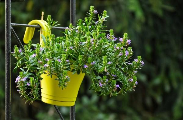 Prendersi cura della piante a febbraio e marzo