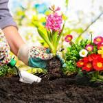 Passione giardinaggio: mai senza la cura della biodiversità [Intervista a Enrico Vezzelli]