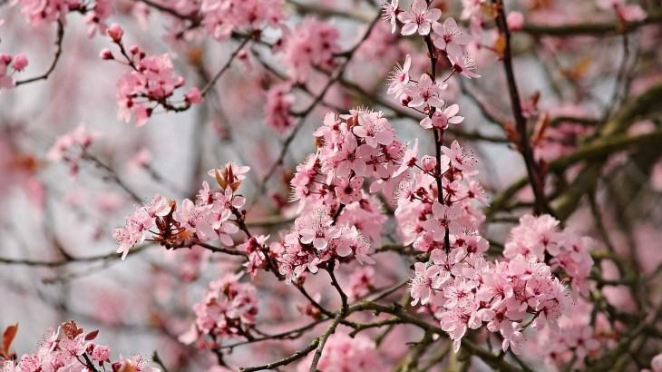 Cosa fiorisce a febbraio