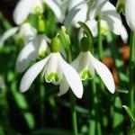 Cosa fiorisce a Gennaio?
