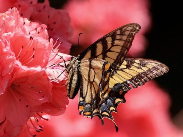 butterfly-108616_960_720