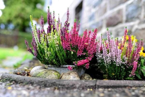 Buon drenaggio per piante