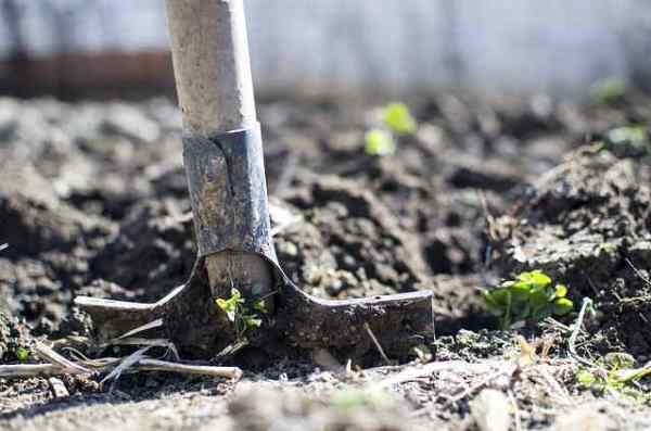 Pala per Giardinaggio