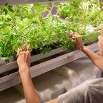 Piante e luci: come creare un piccolo vivaio in mancanza di un ambiente esterno