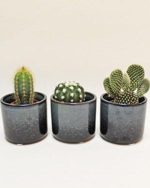 Baby Cacti Trio