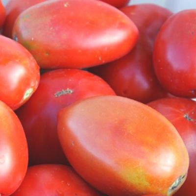 Tomatoes (Amish Paste)