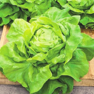 Lettuce (Buttercrunch)
