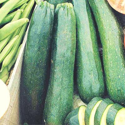 Zucchini (Black Beauty)