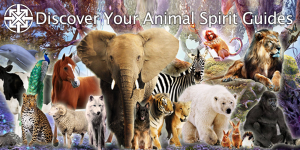 Discover Your Animal Spirit Guides 1