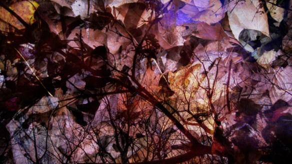 memento-mori-autumn-leaves-2xlarge-1471019790