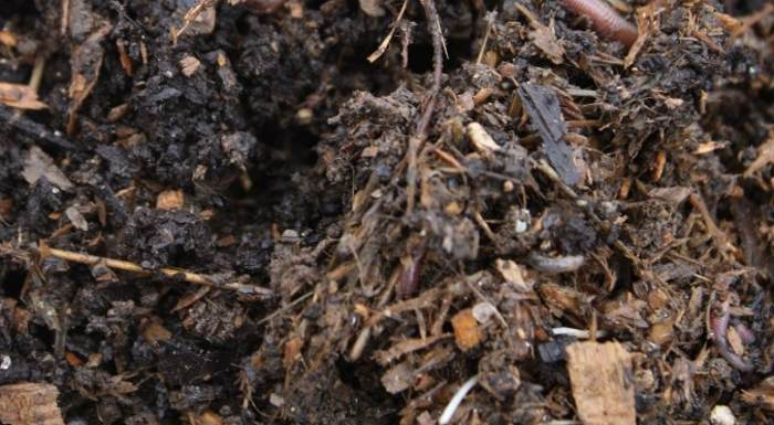 What to do about Dry, Wounded Soils