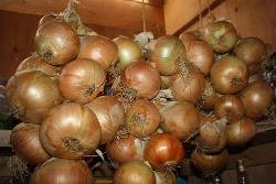 strings of onions