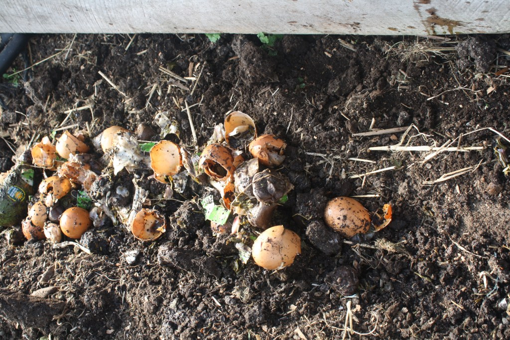 trenching foodscraps