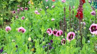 Spring Consults, Fruitful Tips + Fungus Alert!