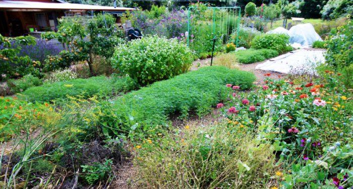 mid jan garden