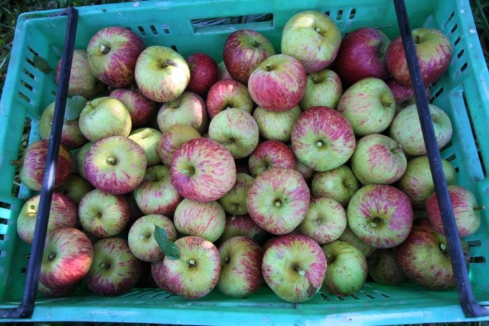 20kg apples per crate