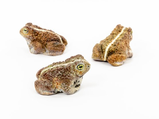 3 very realistic chocolate toads frogs hand painted. sitting on white background