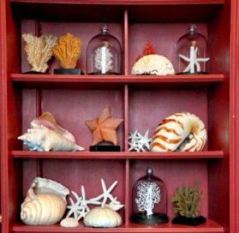 tl-natural-history-cabinet-of-cake