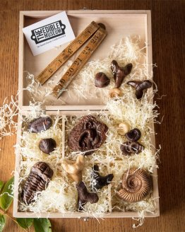 a collection of chocolate fossils in a wooden hamper gift box against wooden background with a logo