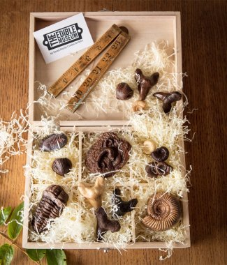 chocolate-fossil-collectors-box
