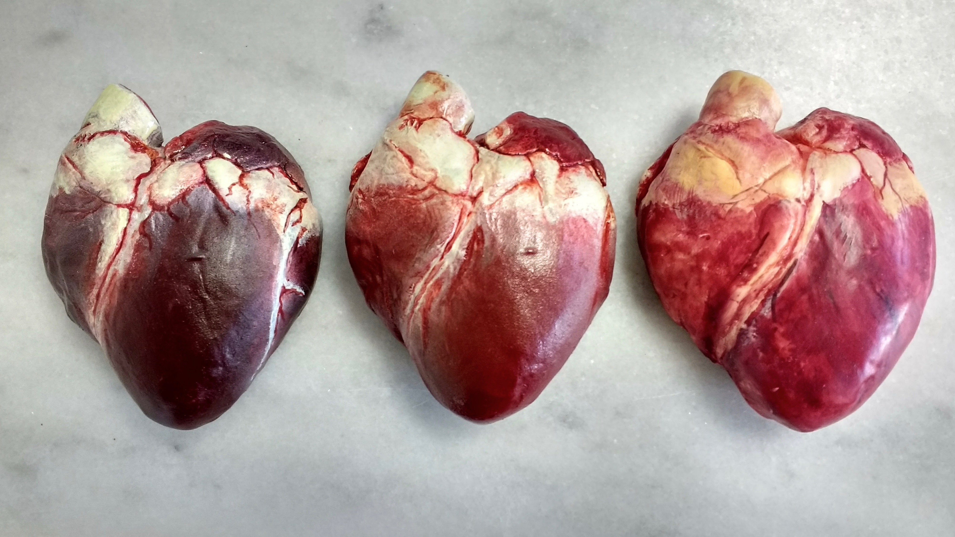 Chocolate Human Heart | The Edible Museum