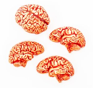 realistic edible white chocolate human brain hemispheres with blood on white background