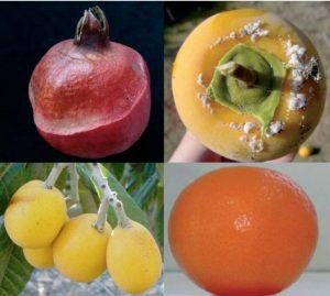 Cultivos alternativos y cítricos