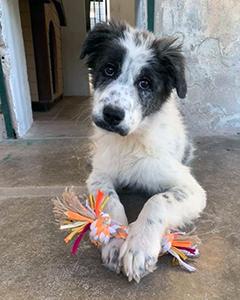 Brunina, l'ultima cagnolina adottata da Ilaria