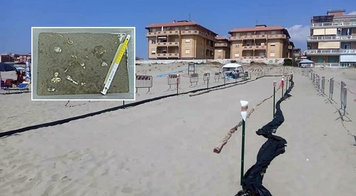 Caretta Caretta. Il nido di tartaruga sulla spiaggia di Torvaianica