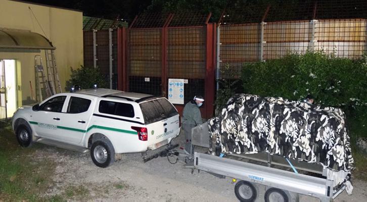Orso Papillon. La sua 3a cattura conferma il problema della gestione dei plantigradi in Trentino