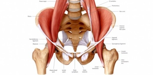 hip flexor pic