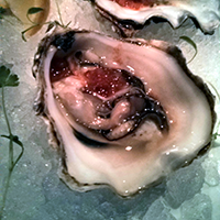 Plump and sweet. My favourite oyster.
