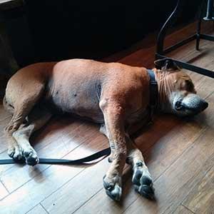Rowan takes a breather at The Flying Dog, Edinburgh.