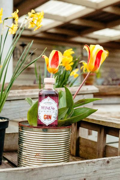 It's a curious thing - a colour changing gin. Hot Tulip gin is the first exclusive gin available to members of the Old Curiosity Distillery Gin Club