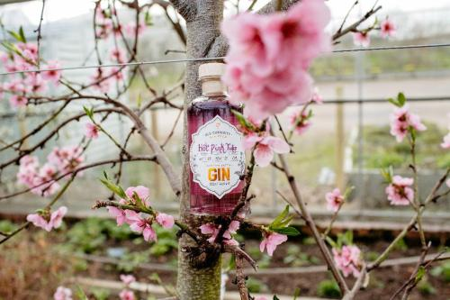 Hot Pink Tulip flavoured gin launches the Old Curiosity Distillery's Gin Club