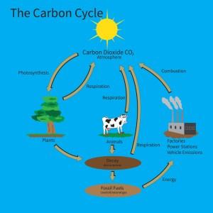 RHS Level 3 Question – Carbon Cycle | Edinburgh Garden School